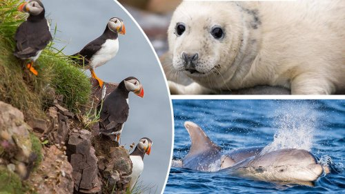 The best places in the UK to see seals, puffins, dolphins and more incredible wildlife
