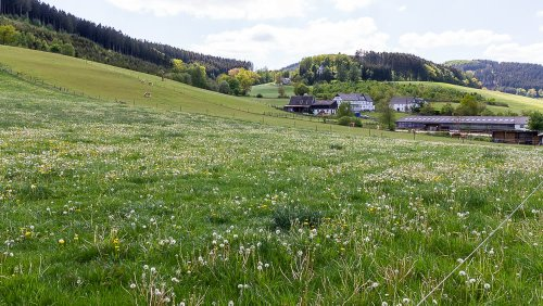 Abwechslungsreicher Spaziergang in Wenholthausen