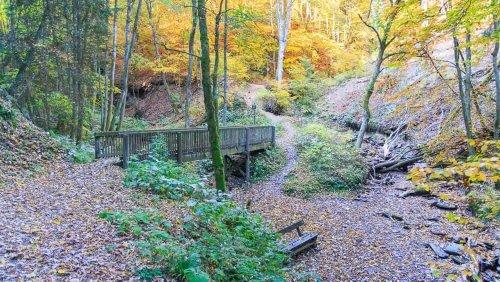 Wandern in Winterberg: Der Schluchten- & Brückenpfad