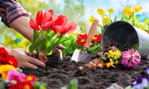 Quick gardening tips to transform your garden in under an hour
