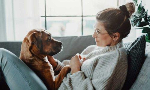 5 most affectionate dog breeds for emotional support