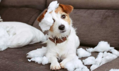 5 naughtiest dog breeds most likely to wreak havoc at home