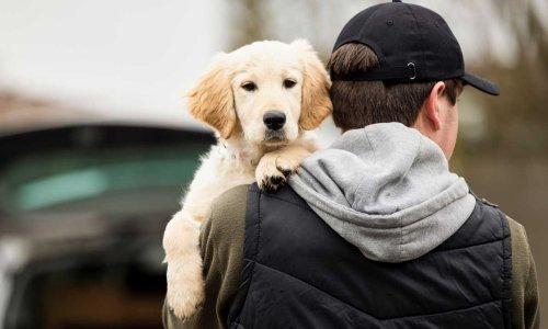 10 dog breeds most at risk of being stolen