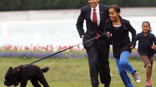 Die Obamas trauern um Familienhund Bo