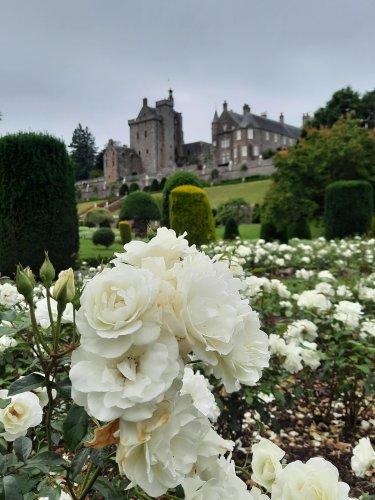 Garden of the week: Drummond Castle Gardens, Muthill, Crieff