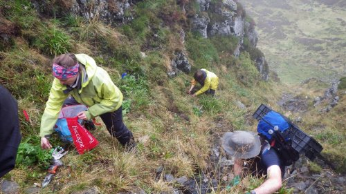 Scotland's rarest plants are being given a helping hand in the fight for survival