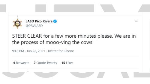 Cows set for slaughter break free, stampede in Pico Rivera