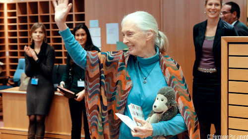 Immersive Jane Goodall exhibit coming to Los Angeles in fall