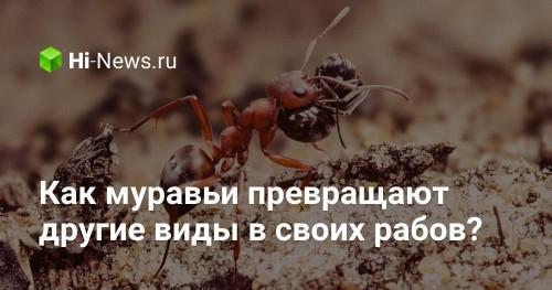 Как муравьи превращают другие виды в своих рабов? - Hi-News.ru