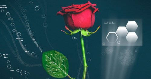 Учёные смогли вырастить провода внутри роз - Hi-News.ru