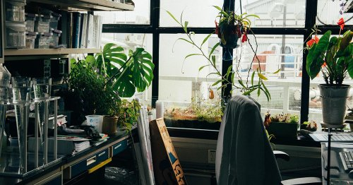 The 15 Best Places To Buy Houseplants Online