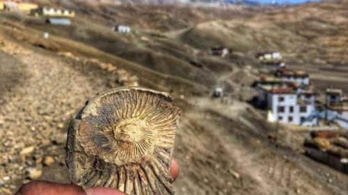 Himachal govt bans cheap sale of fossil souvenirs in Spiti valley