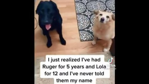 Human tells her name to pet dogs, they react. Watch adorably funny viral video