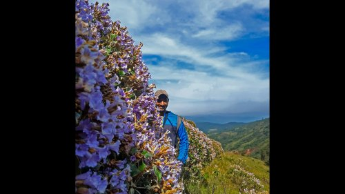 Meet the ecologist giving grass roots in the Nilgiris