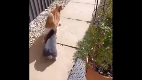 Bunny won't let this cat walk straight. Watch this hilarious video