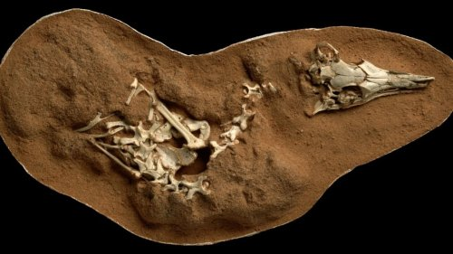 Footprints of dinosaurs that walked on Earth 110 million-years-ago found in UK