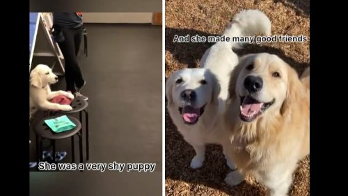 Watch: This transformation of a shy puppy to entertaining doggo is aww-worthy