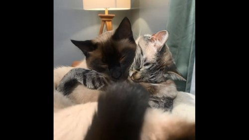 Adorable video of 'soulmate' cats hugging each other is all about love