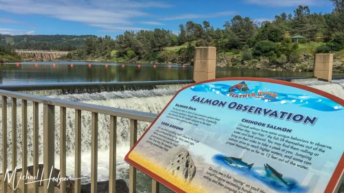 California road trip visit to Feather River Fish Hatchery & Oroville