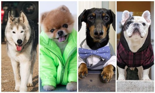 Highest paid Instagram dog influencers