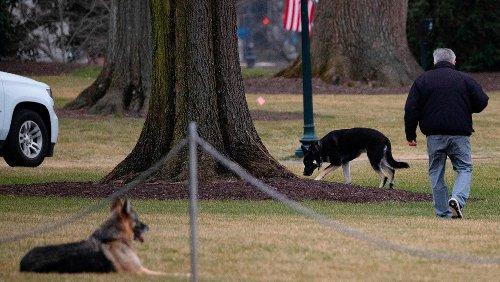 Newsmax Host and Guests Skewered After Mocking President Biden's Senior Dog, Champ