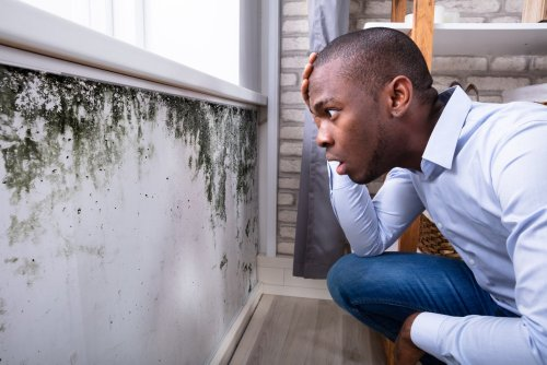 How To Get Rid Of Mold - Step By Step Guide