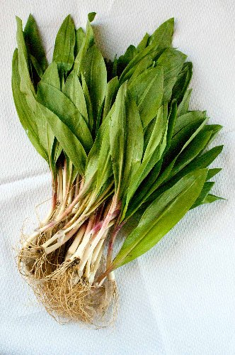 Ramps Recipe - Sweet and Sour Ramps or Pearl Onions | Hank Shaw