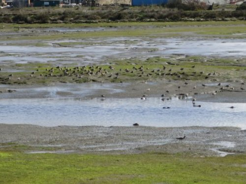 Proposed Redwood City development would fill in Bay wetlands to build 350-unit apartment complex