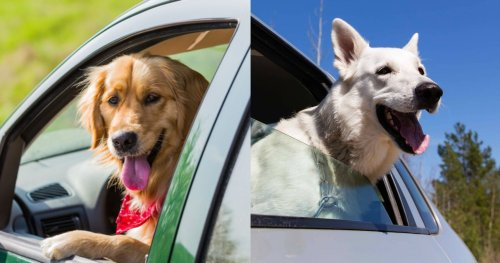 10 Cars That Are Perfect For Large Dog Owners