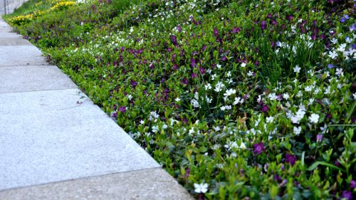 15 Ground Cover Plants That Love Shade