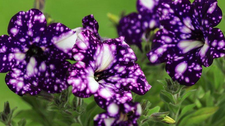 15 Best Purple Plants For Your Flower Garden