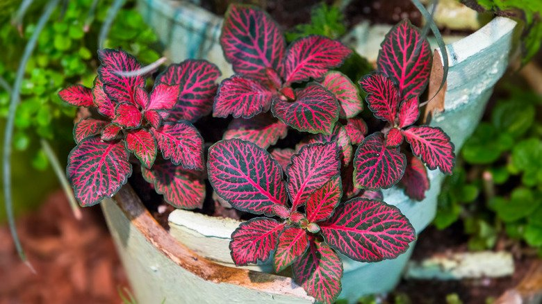 15 Pink Plants Your Houseguests Will Be Obsessed With