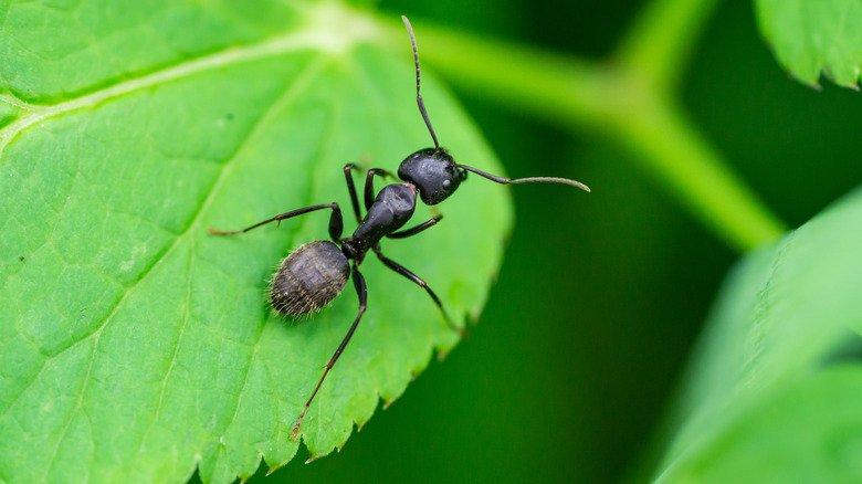 8 Best Ways To Get Rid Of Ants