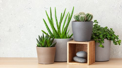 Why You Should Reconsider Buying Succulents