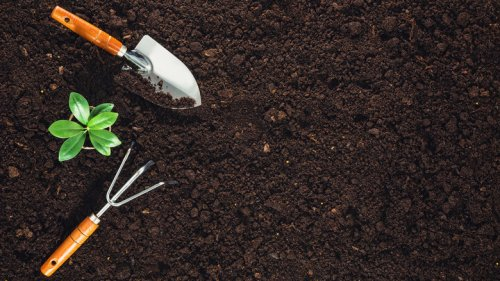 You've Been Cleaning Your Gardening Tools Wrong This Entire Time
