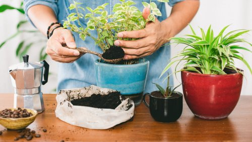 If You're Not Using Coffee Grounds In Your Garden, You're Doing It Wrong