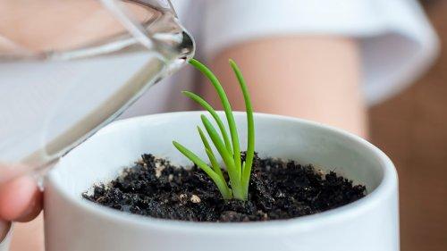 How Often Should Indoor Plants Be Watered?