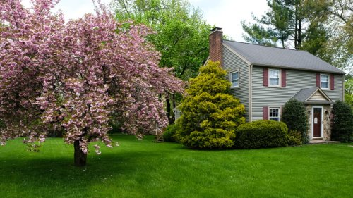 15 Small Trees That Won't Overtake Your Yard