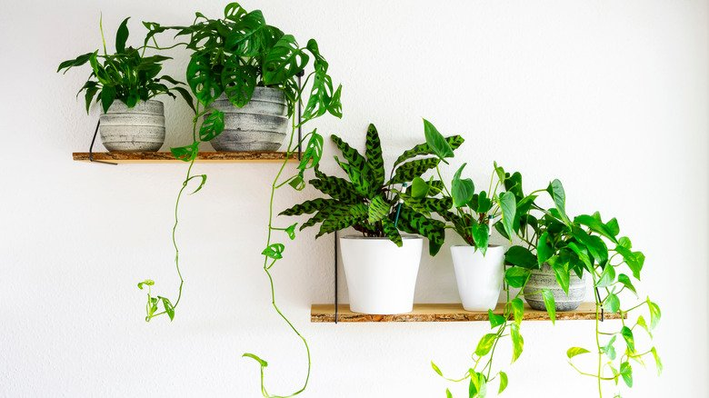What Are The Easiest Houseplants To Grow?