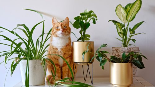 The Houseplants You Should Avoid If You Have Cats