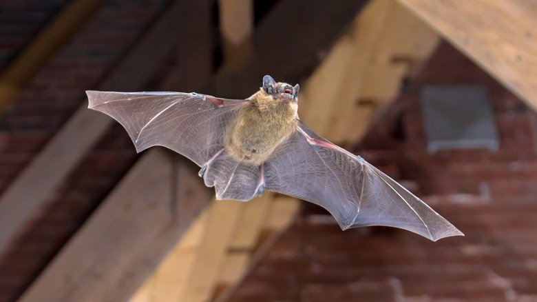 8 Best Ways To Get Rid Of Bats In Your Attic