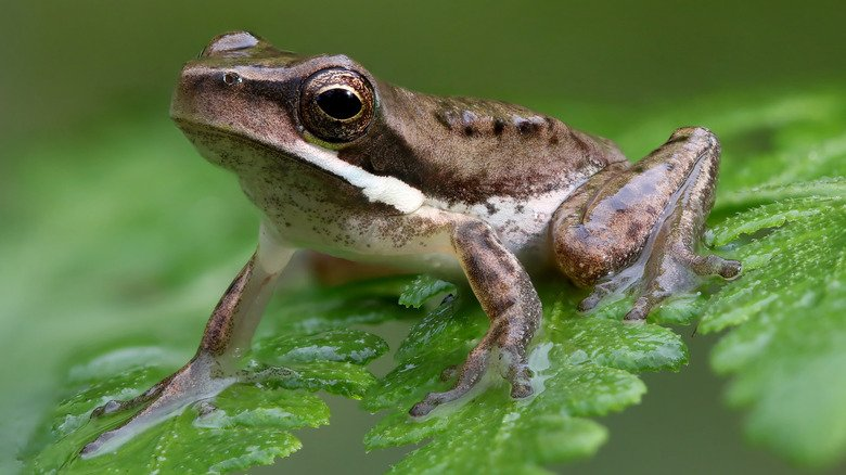 8 Best Ways To Safely Get Rid Of Frogs From Your Garden