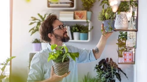 What Is The Hardest Houseplant To Grow?