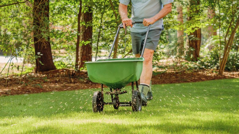The Best Kind Of Lawn For Shady Backyards