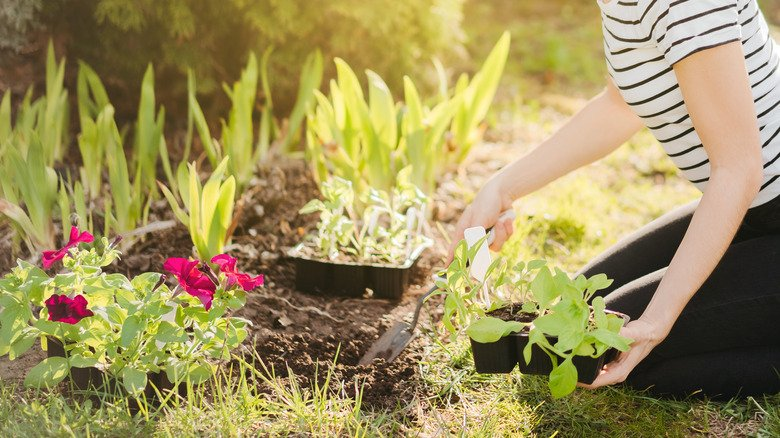 Want A Feng Shui Garden? Here's What You Should Know