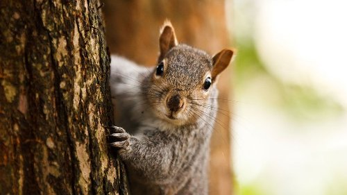 5 Things You Didn't Know About Squirrels