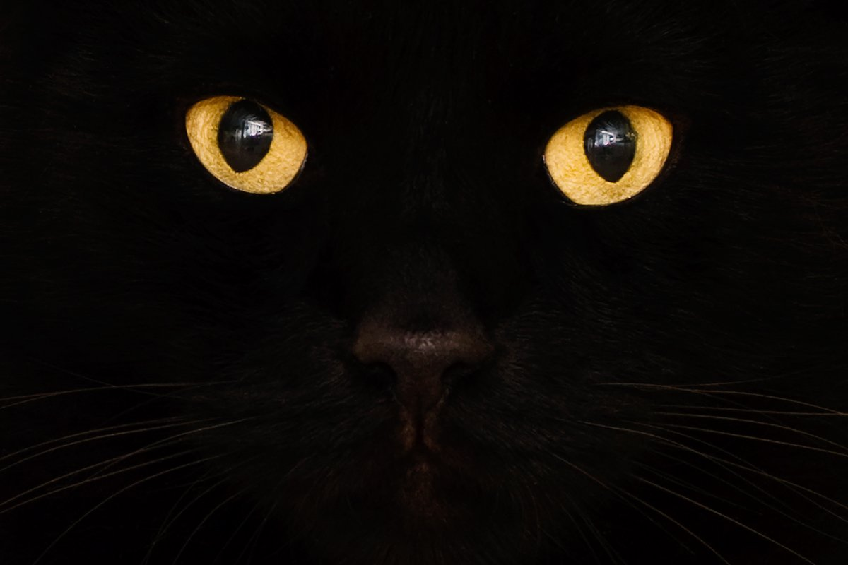 Why Are People So Superstitious About Cats?