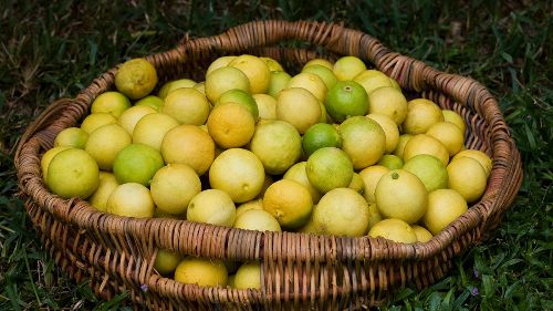 What's the Difference Between Key Limes and Regular Limes?