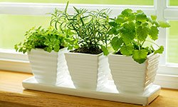 Backyard-Free Gardens: How to Grow Without Space