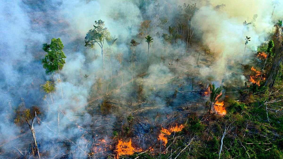 Fire, Deforestation Have 'Flipped' the Amazon to Be Emitter of Carbon